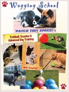 Dogs C&A plus Treibball collage