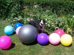 DOGS pics Treibball #7