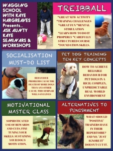 DOGS seminar poster