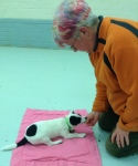 Angela lures a puppy to lie down on the mat.