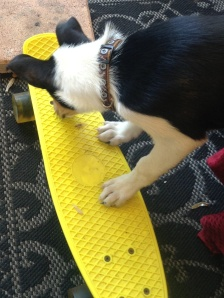 Clancy getting on a skateboard