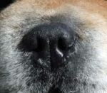 DOGS NOSE PIC #2