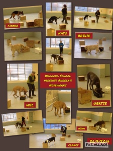 A COLLAGE OF ANGELA'S NOSEWORKS 26th JULY 2014