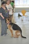 DOGS OTEC PP PICS Fixxer mat